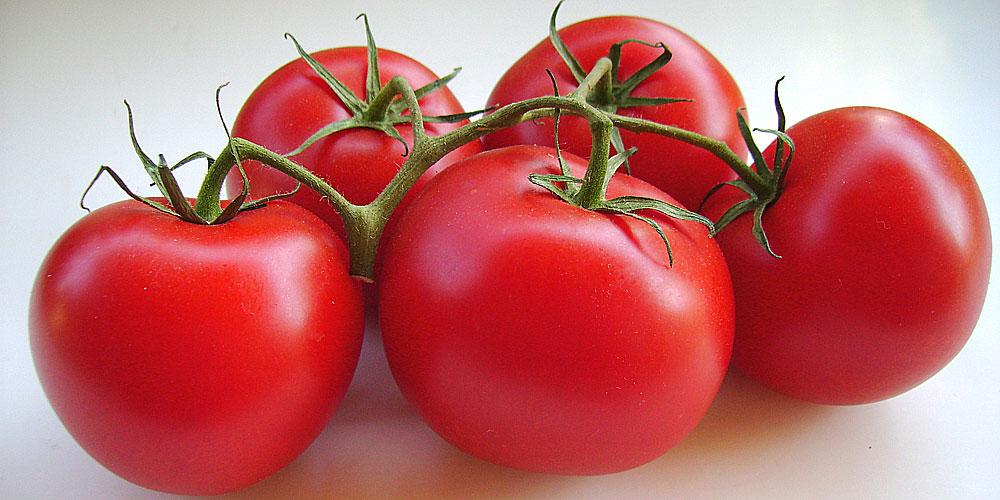 Des tomates fraîches